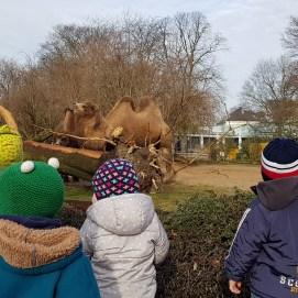 Einmal die Woche besuchen wir die Tiere im Zoo.